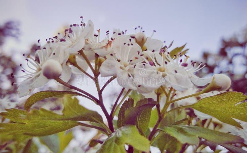 Fleurs des arbres image stock