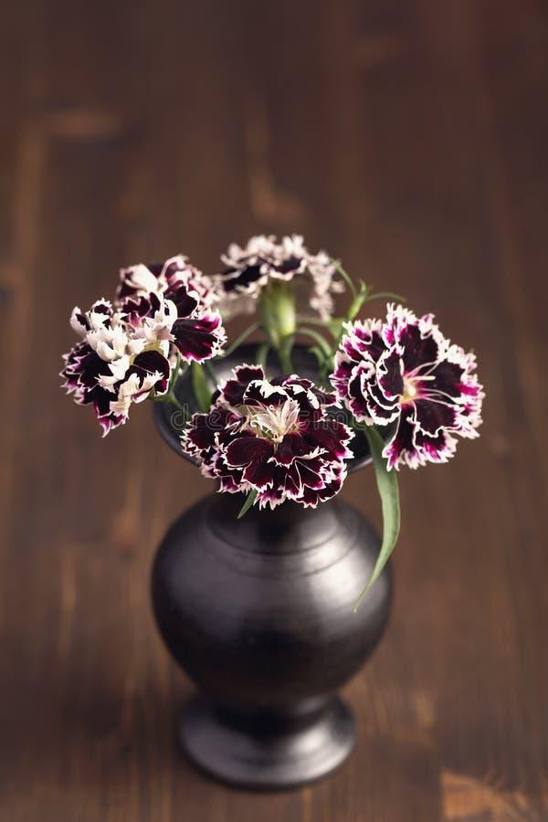 Fleurs douces de William images stock