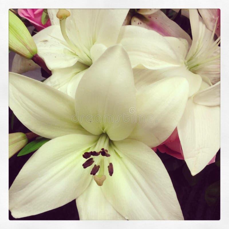 Fleurs du coeur photo stock