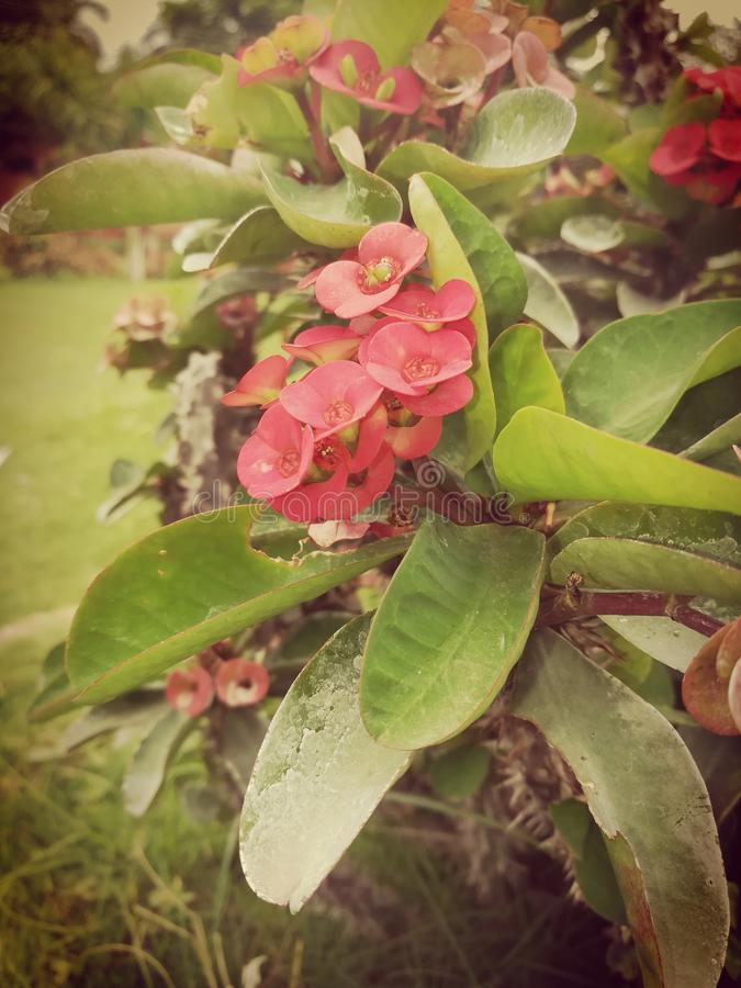 Fleurs du numéro un du monde belles image stock
