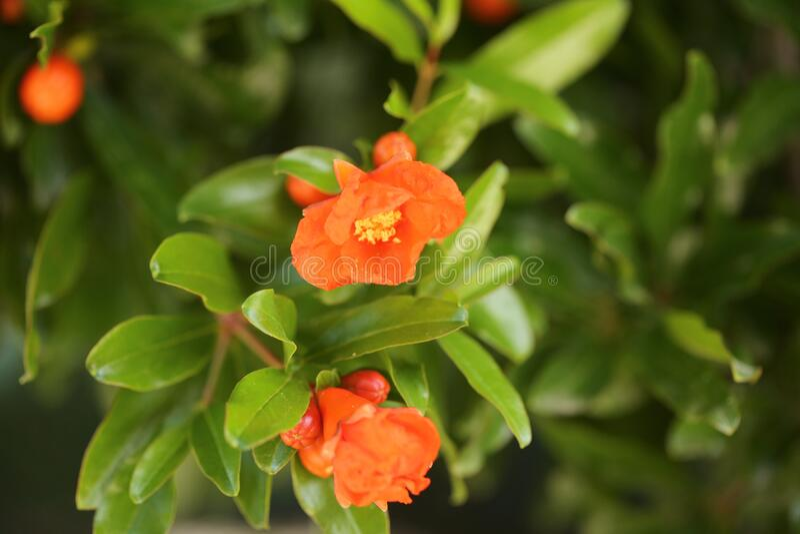Fleurs du solstice image stock