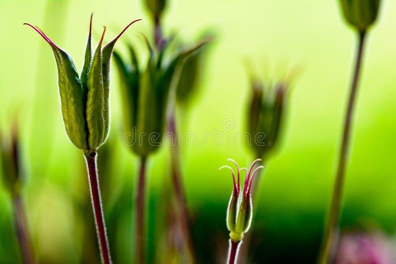 Fleurs en été images stock