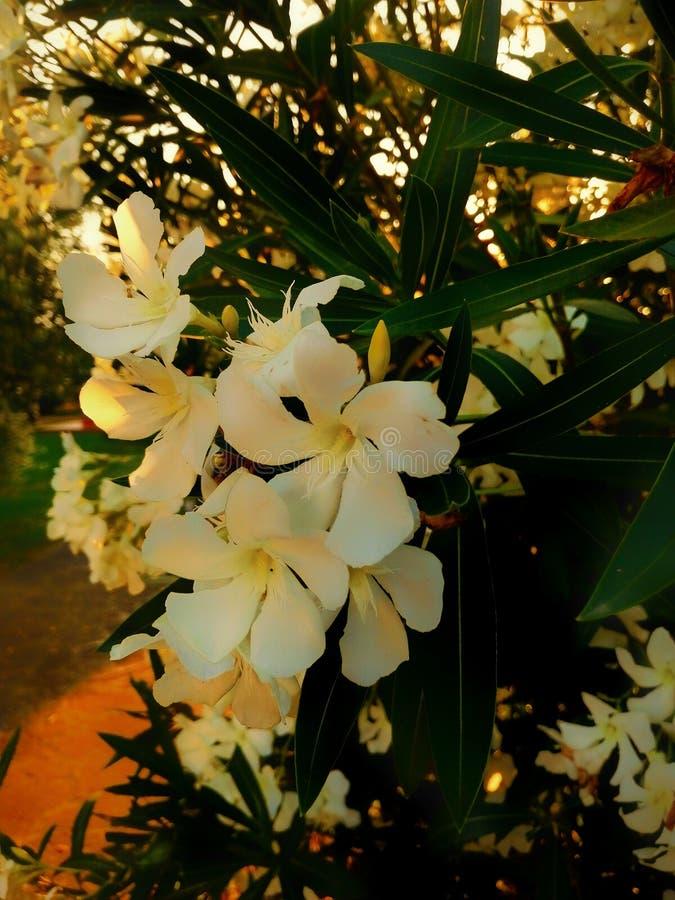 Fleurs en été 2 images stock