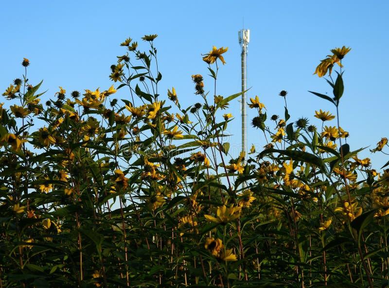 Fleurs en automne image libre de droits