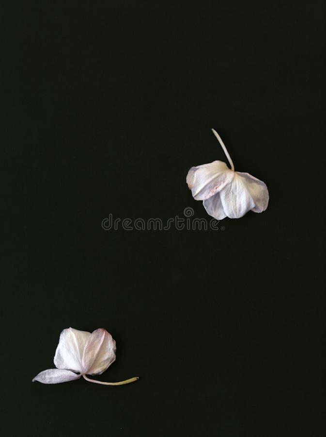 Fleurs en baisse d'orchidées images stock