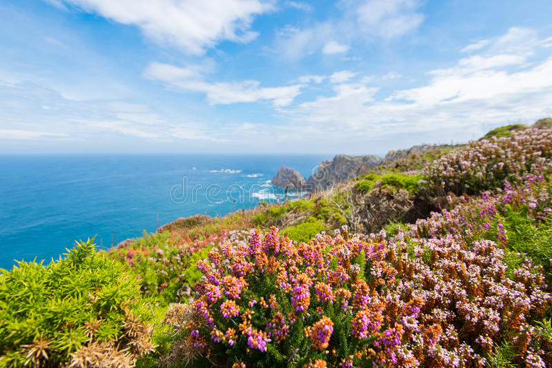 Fleurs en Espagne du nord image libre de droits