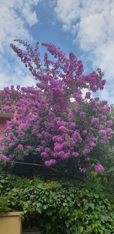 Fleurs en grande île photo stock