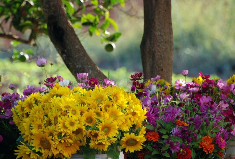 Fleurs en lumière de matin photos libres de droits