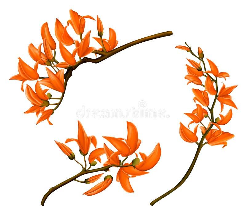 Fleurs enfoirées de teck photo libre de droits