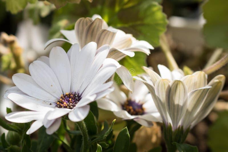 Fleurs enjoing leur soleil photographie stock libre de droits
