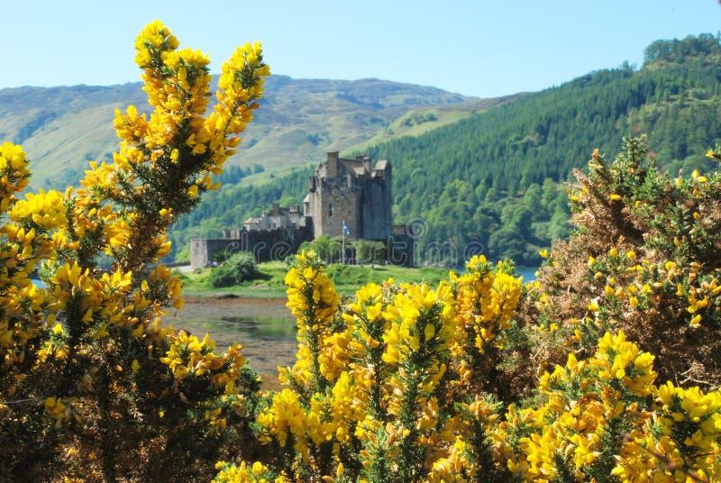 Fleurs entourant une vue d'Eilean Donan Castle image stock