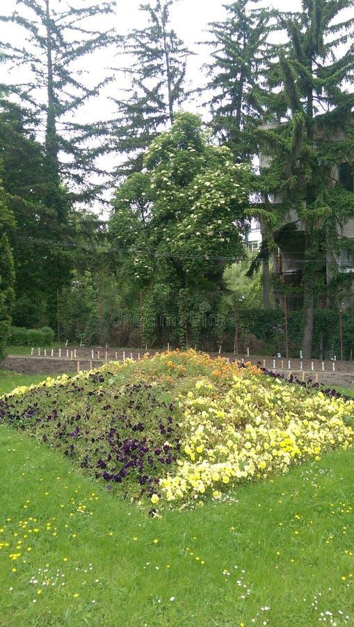 Fleurs et arbres images stock