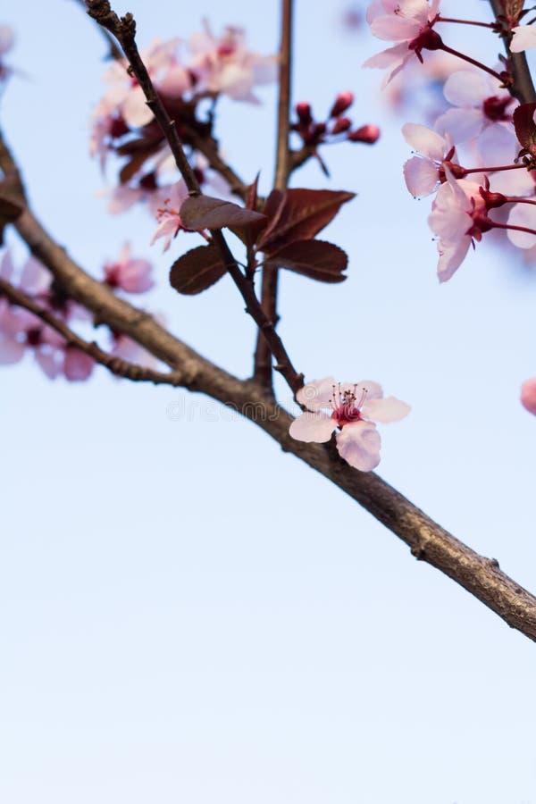 Fleurs et bourgeons de ressort photos stock
