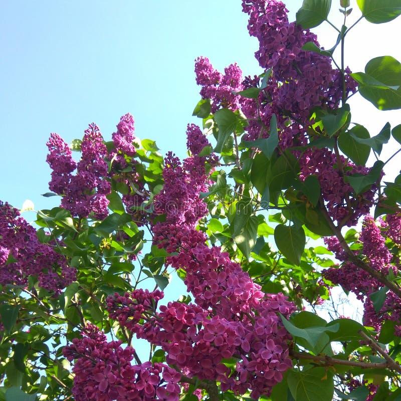 Fleurs et ciel photo stock