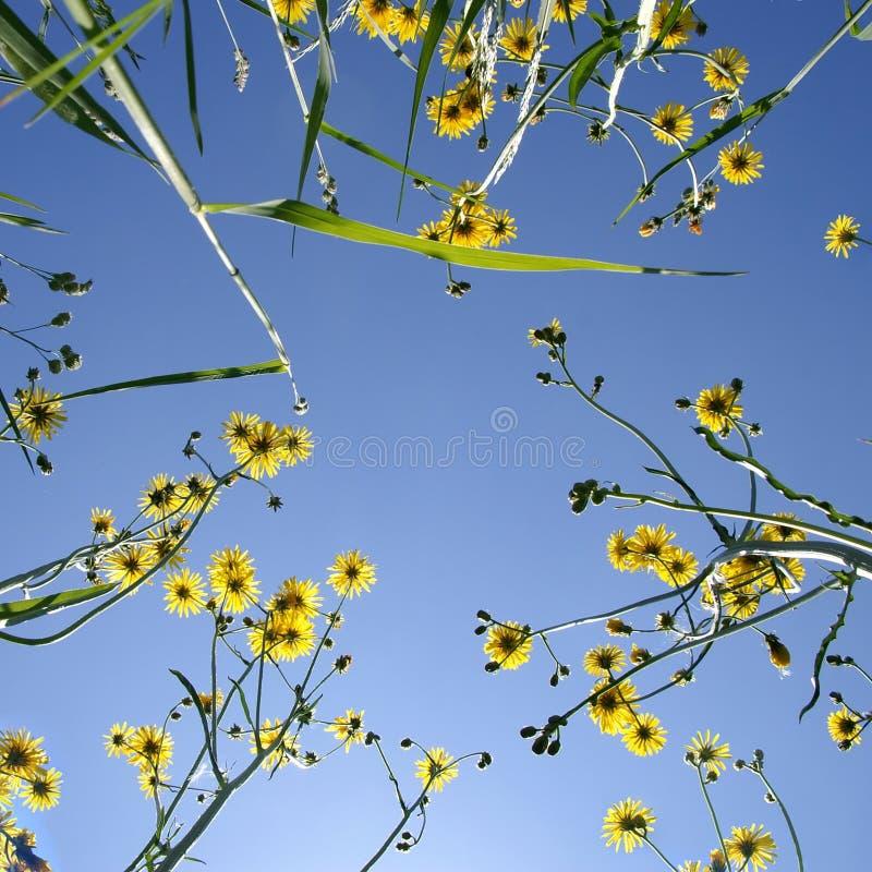 Fleurs et ciel bleu. photographie stock
