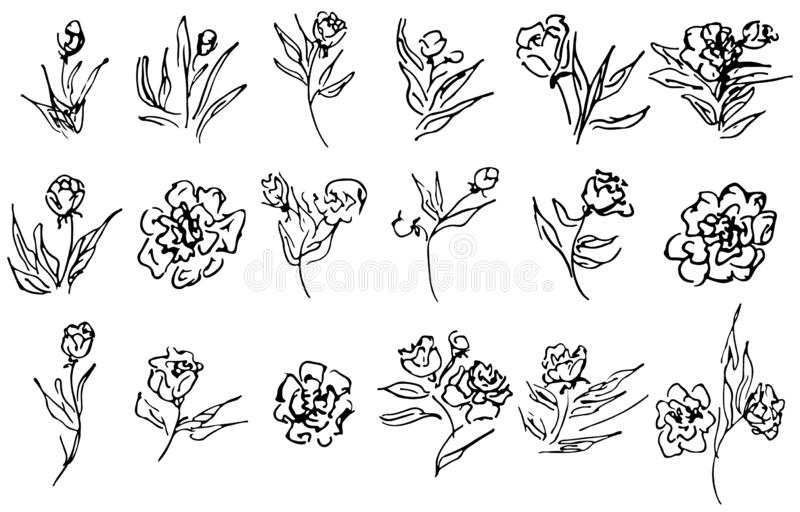 Fleurs et collection tirée par la main de branches d'isolement sur le fond blanc 18 éléments graphiques floraux grand ensemble de illustration stock