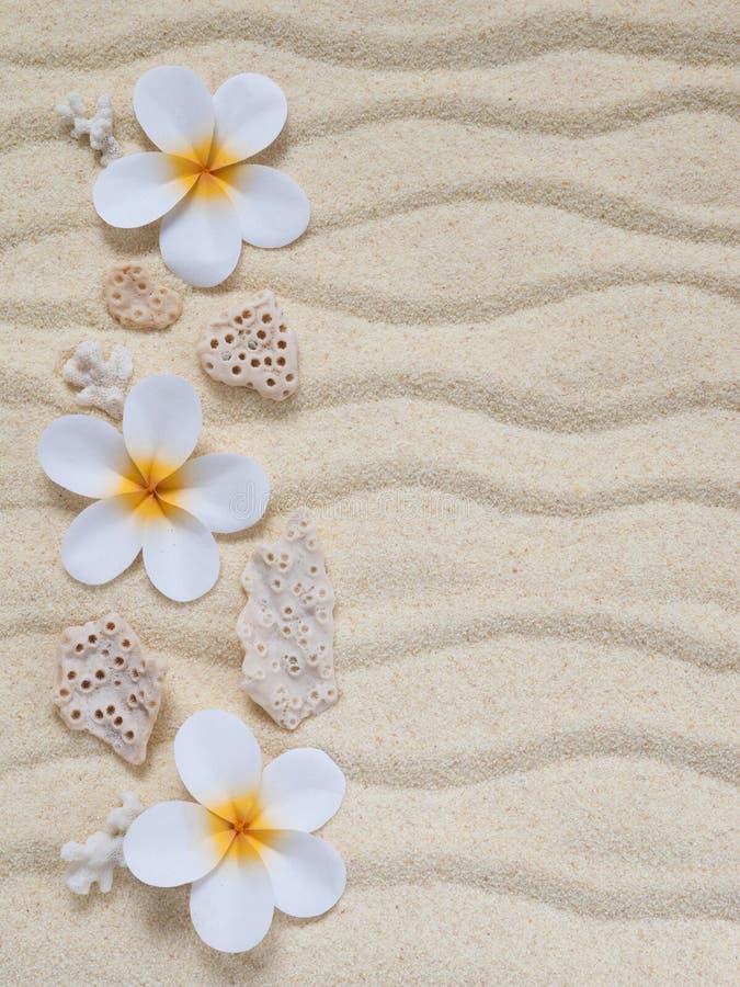 Fleurs et coraux de tiare image stock image du nature 52416039 - Initiatives fleurs et nature ...