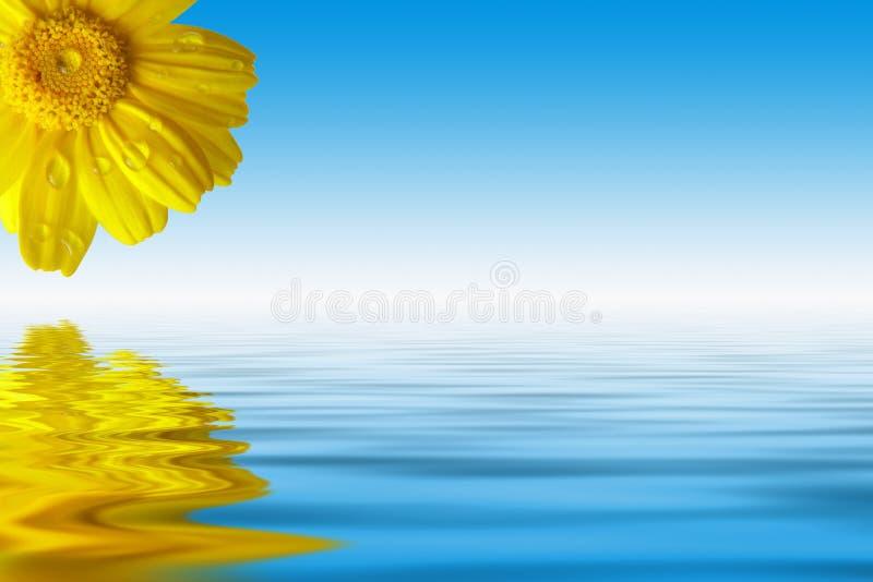 Fleurs et eau illustration stock
