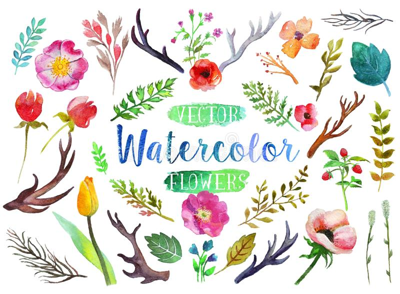 Fleurs et feuilles d'aquarelle d'aquarelle de vecteur illustration de vecteur