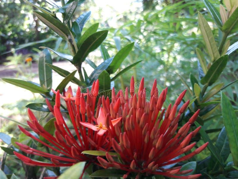 Fleurs et feuilles de nature images stock
