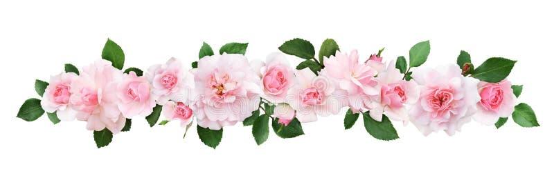 Fleurs et feuilles de rose de rose dans une ligne composition photos libres de droits