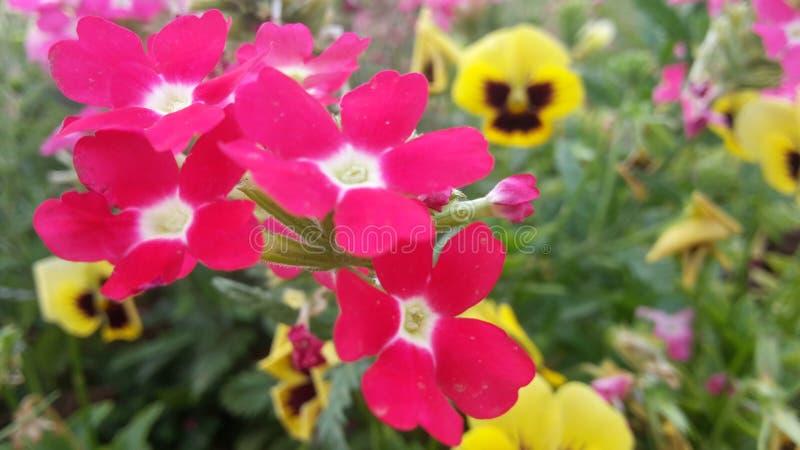 Fleurs et fleurs et fleurs photographie stock libre de droits