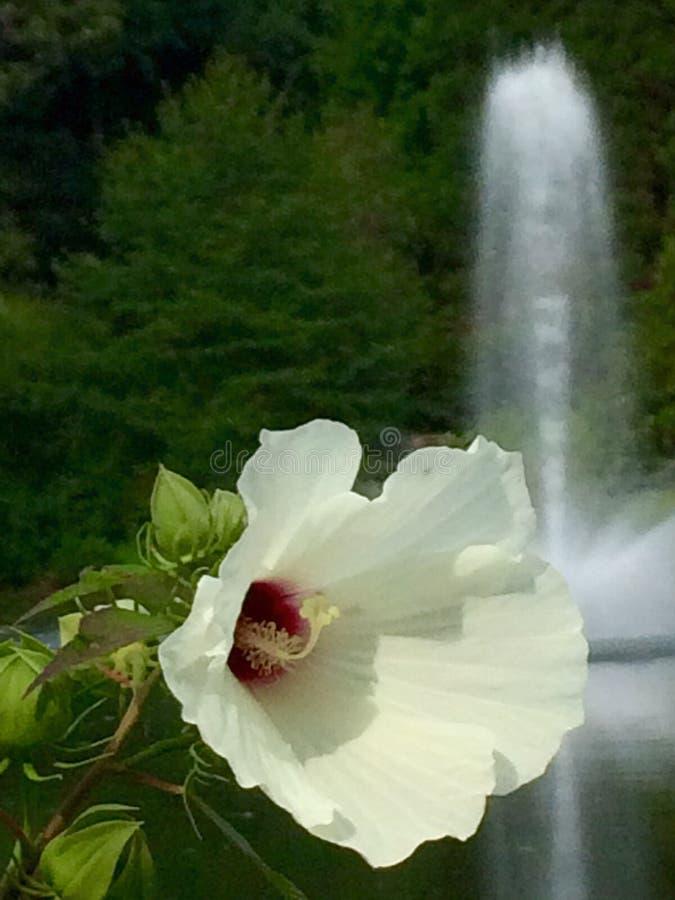 Fleurs et fontaines image stock