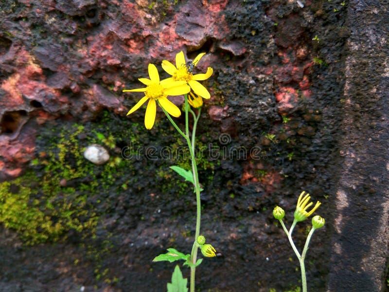 Fleurs et fourmi jaunes photo stock