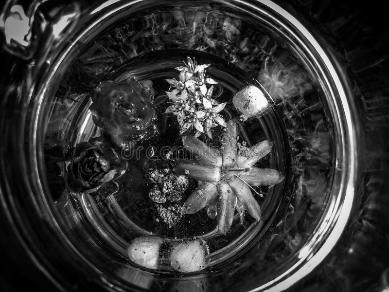 Fleurs et glace images stock