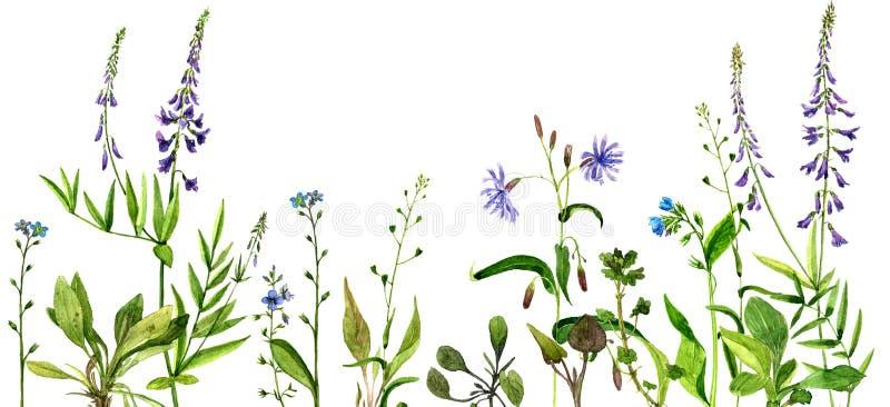 Fleurs et herbes de dessin d'aquarelle illustration de vecteur