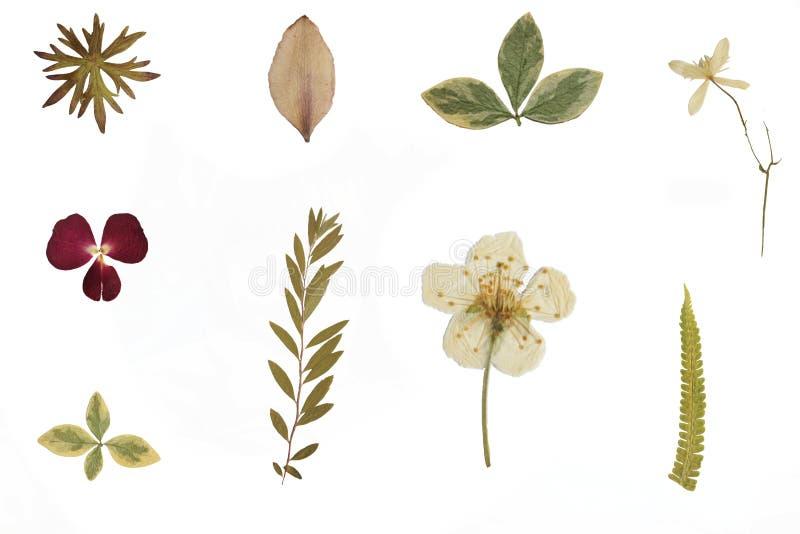 Fleurs et herbier secs images stock