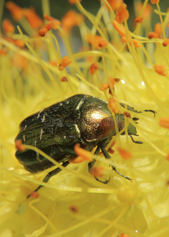 Fleurs et insectes image stock