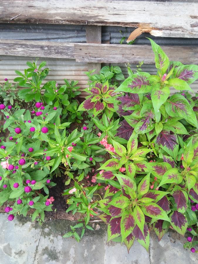 Fleurs et jardin photos stock