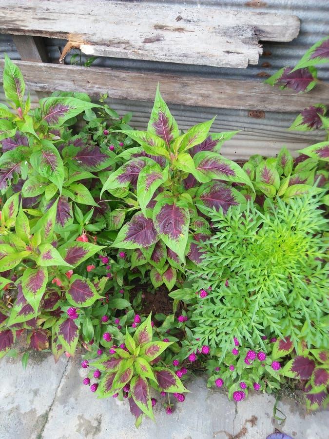 Fleurs et jardin images stock