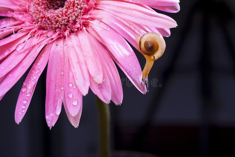Fleurs et l'escargot photo libre de droits