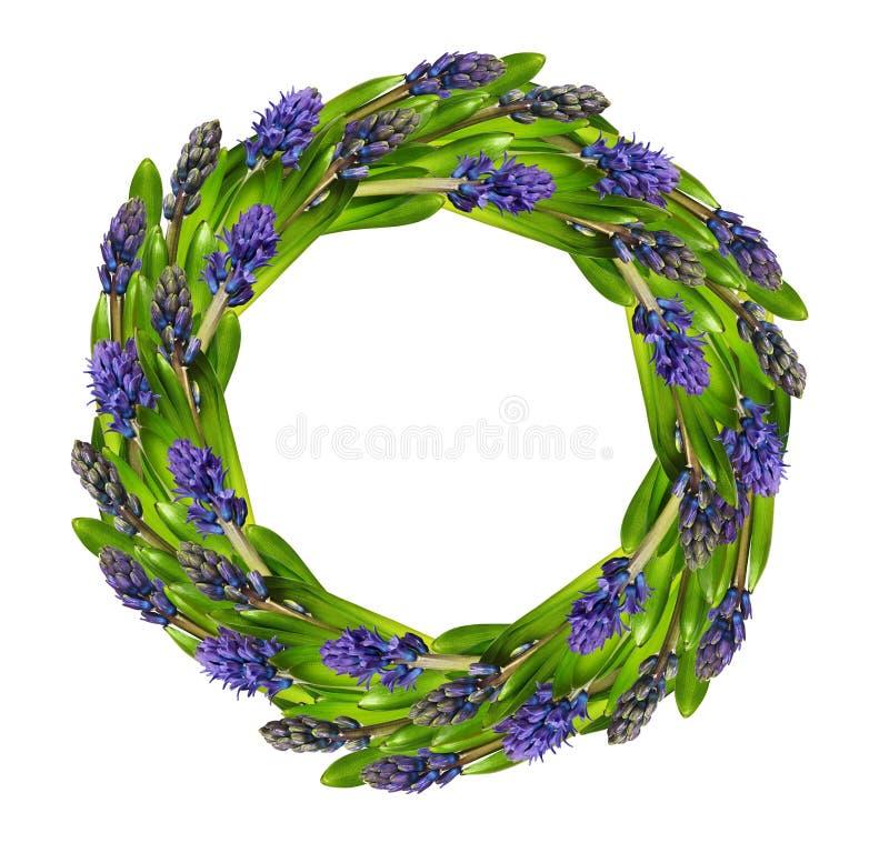 Fleurs et leavesin bleus de jacinthe une guirlande ronde photographie stock libre de droits