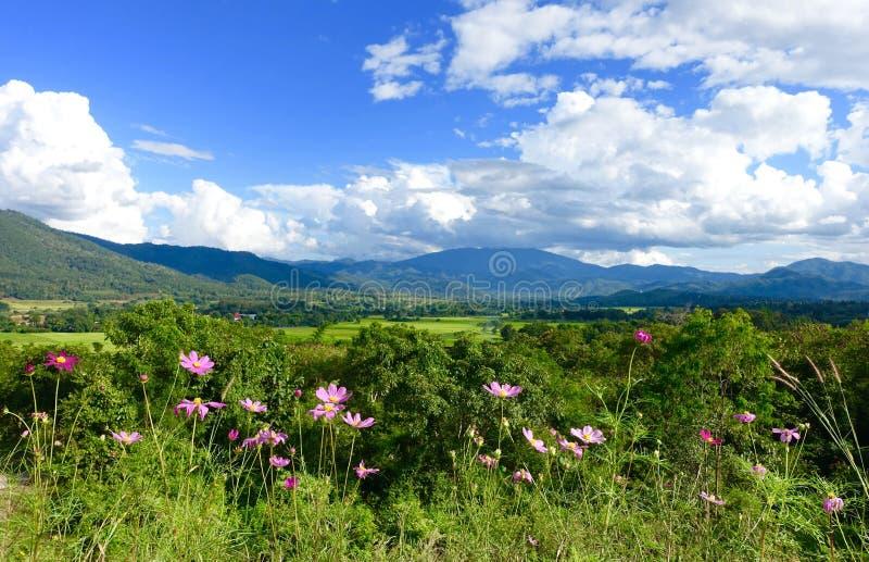 Fleurs et montagne images libres de droits