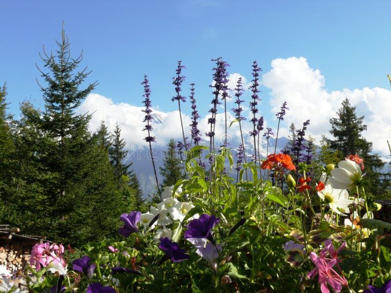 Fleurs et montagne alpines photos stock