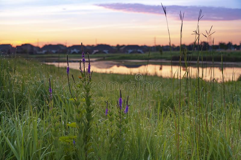 fleurs et nuages pourpres par l'étang au lever de soleil photo stock