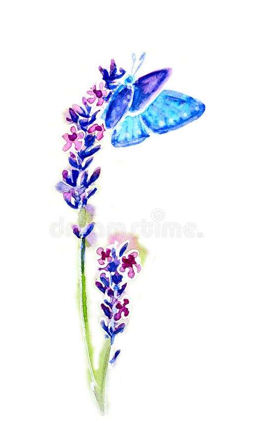 Fleurs et papillons de lavande d'été illustration libre de droits