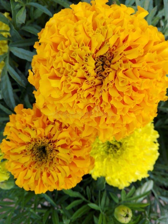 Fleurs et plantes images libres de droits