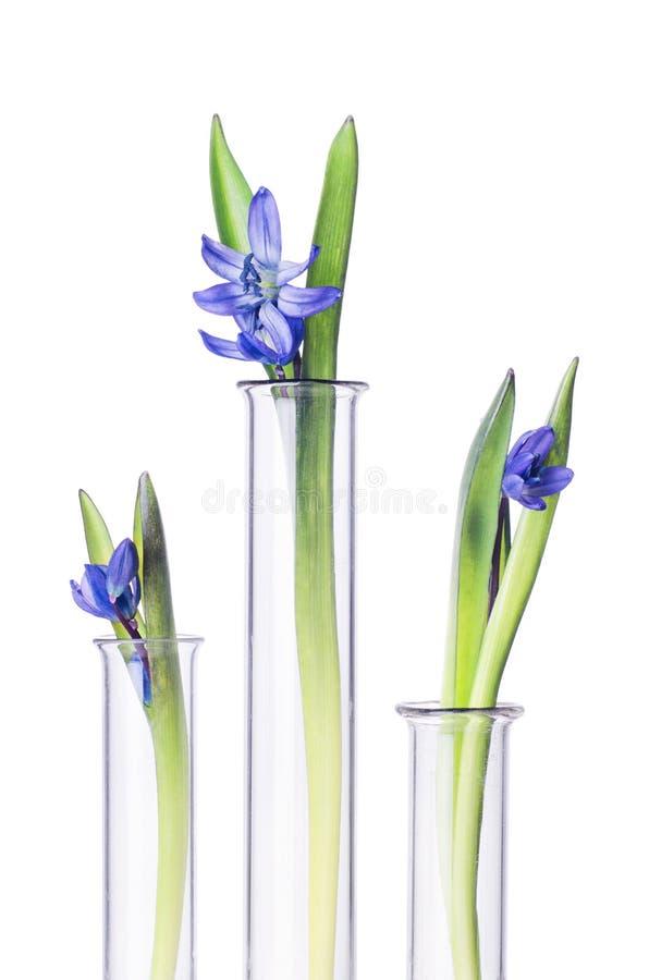 Fleurs et plantes dans des tubes à essai d'isolement sur le blanc photographie stock