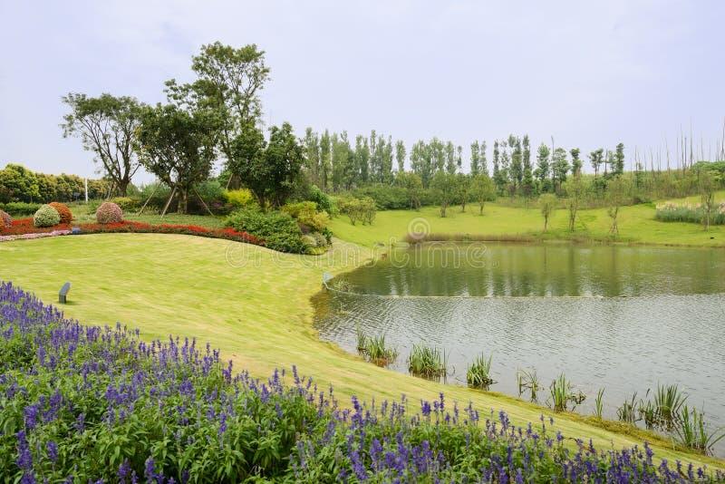 Fleurs et plantes de Lakeside en été nuageux image libre de droits