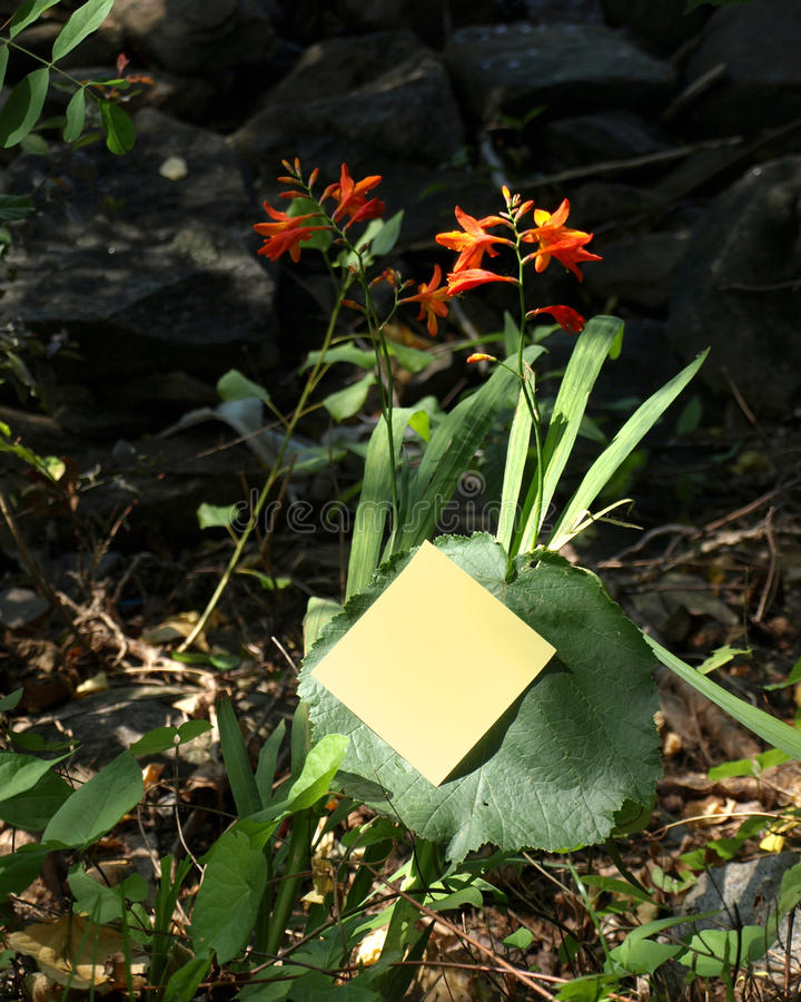Fleurs et post-it photos libres de droits