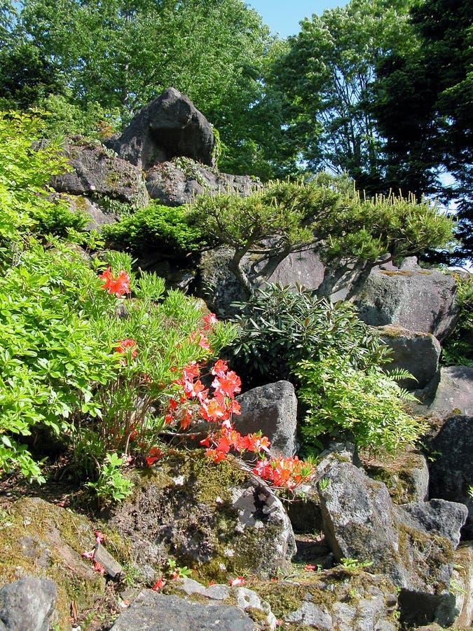Fleurs et roches images stock