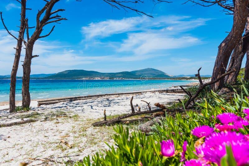Fleurs et sable blanc en plage de Maria Pia dans Alghero photo stock