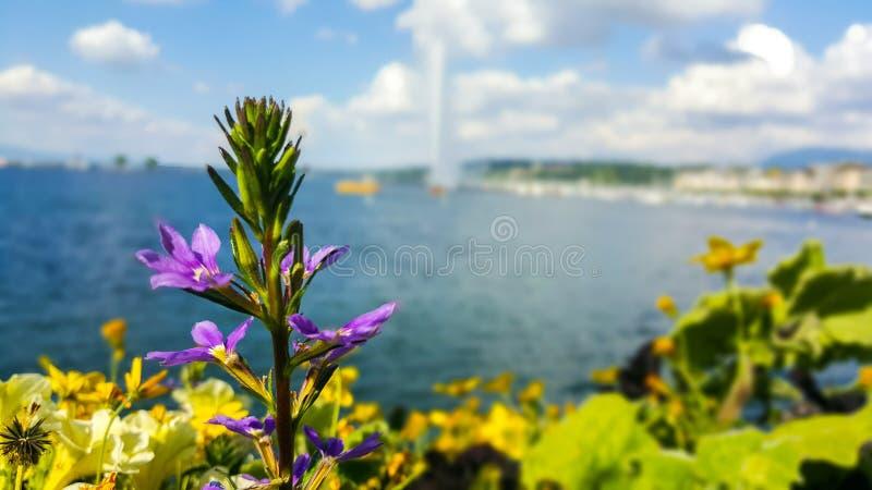 Fleurs et un lac photos libres de droits