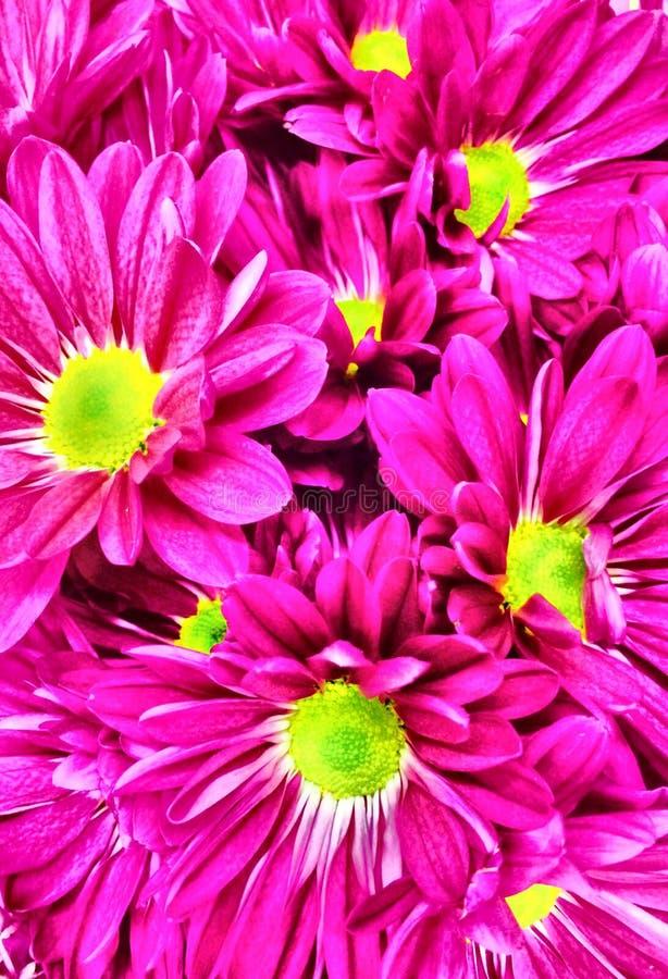 Fleurs et x28 ; Up& étroit x29 ; photos stock
