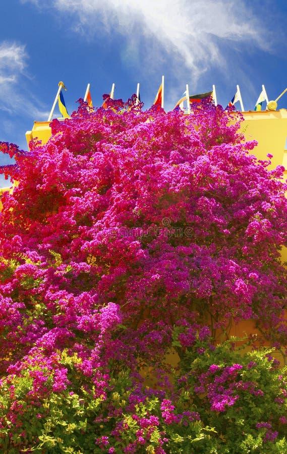 Fleurs exotiques roses et ciel bleu. image libre de droits