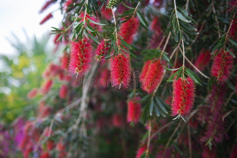 Download Fleurs exotiques rouges image stock. Image du instruction - 45359707